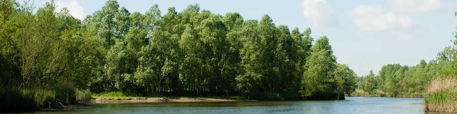 Botenverhuur in de Biesbosch