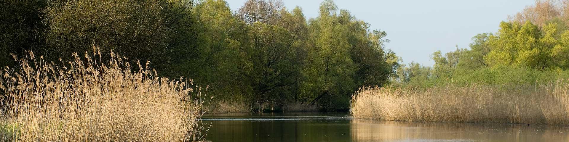 Sloep huren in de Biesbosch